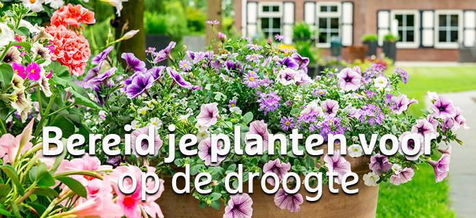 2020_voorbereiden_droogte_01.jpg